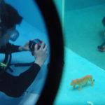 保護中: デジタル水中撮影(1/2)(受講者限定)