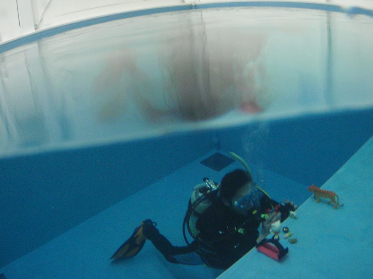 水中写真講座関係