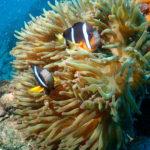保護中: 魚の見分け方(フィッシュID)