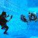 ③ダイビングの実際と水中環境